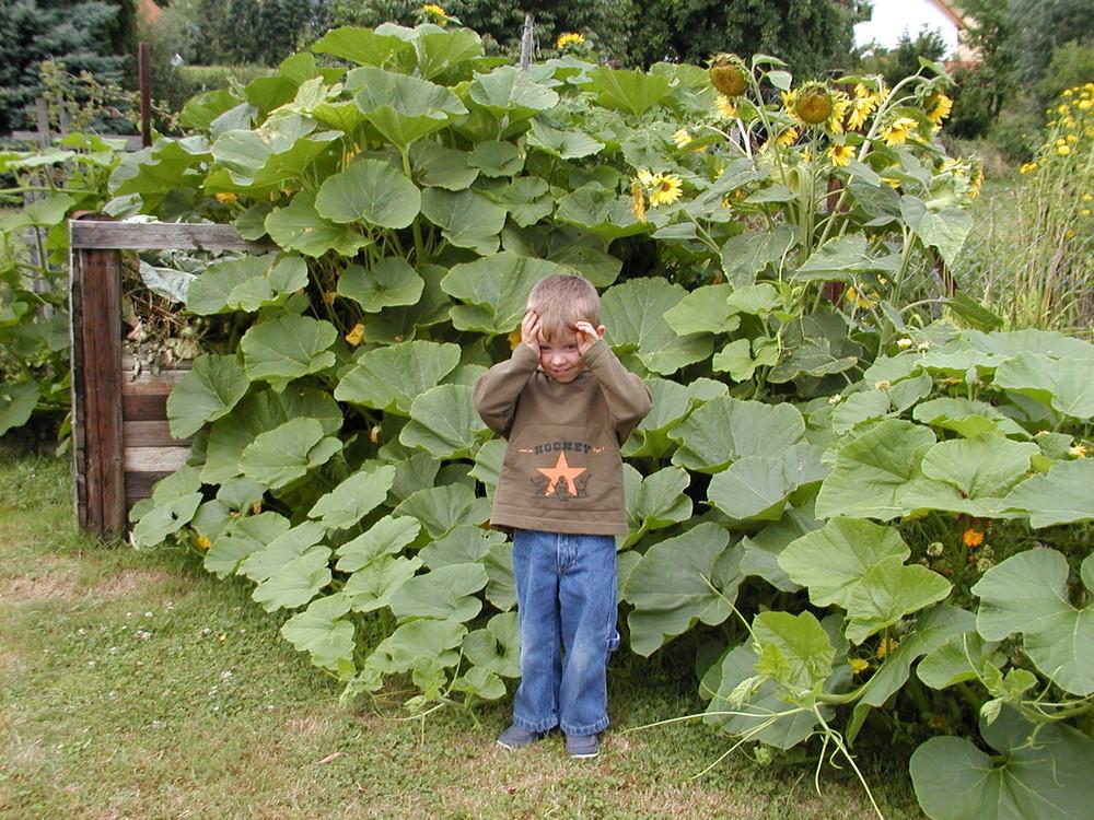 Die Kurbispflanze Ist Gross Foto Bild Kinder Kinder Im
