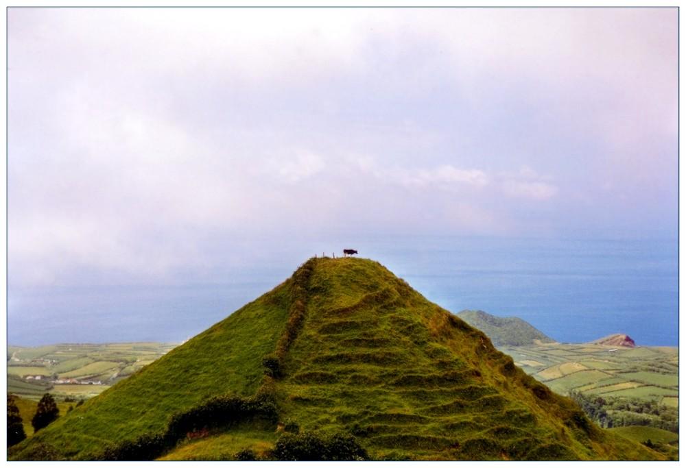 Die Kuh auf dem Vulkan