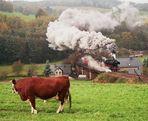 Die Kuh von Markersbach