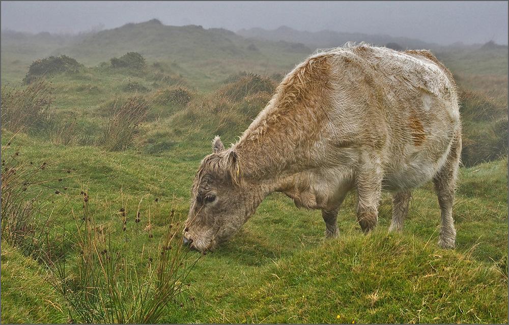 Die Kuh von Minions anstatt...