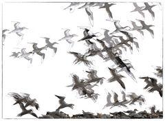 Die Kunst des Fliegens