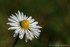 die lachende Blüte