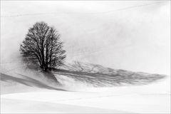 Die langen Schatten des Winters ...