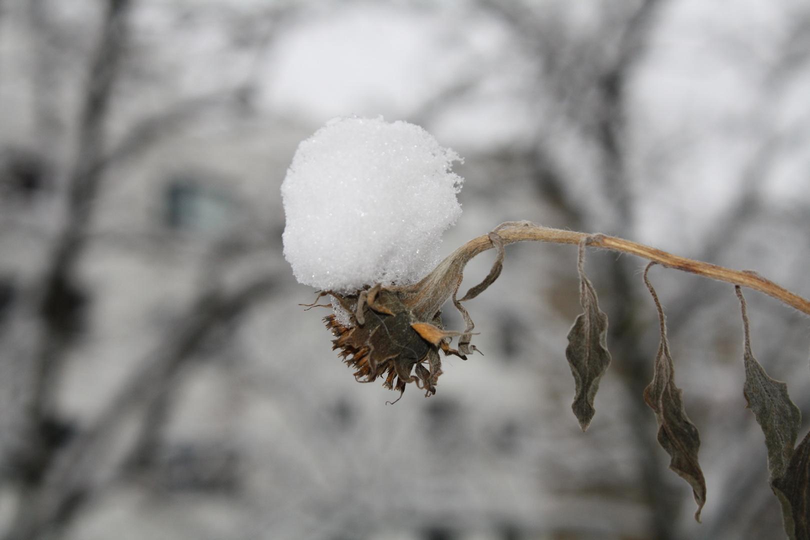 Die Last des Winters ...