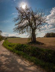 Die Leiter am Baum ..... von einem Osterspaziergang