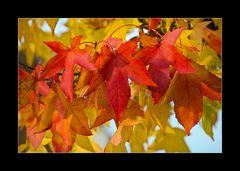 Die letzen Blätter