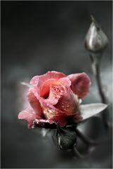 ...die letzte Blüte...