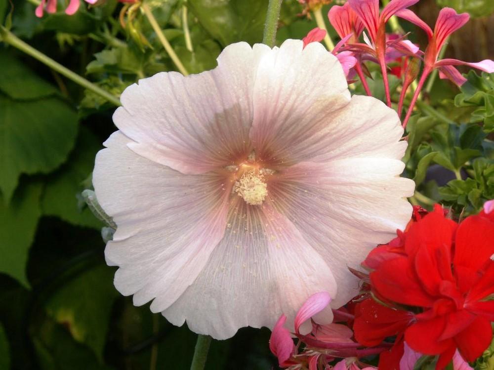 Die letzte Blüte für 2007