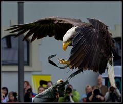 Die letzte Sekunde des Kükens Adler bei der Landung