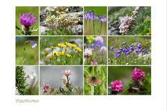 die letzten Alpenblumen...