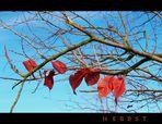 ...die letzten Blätter