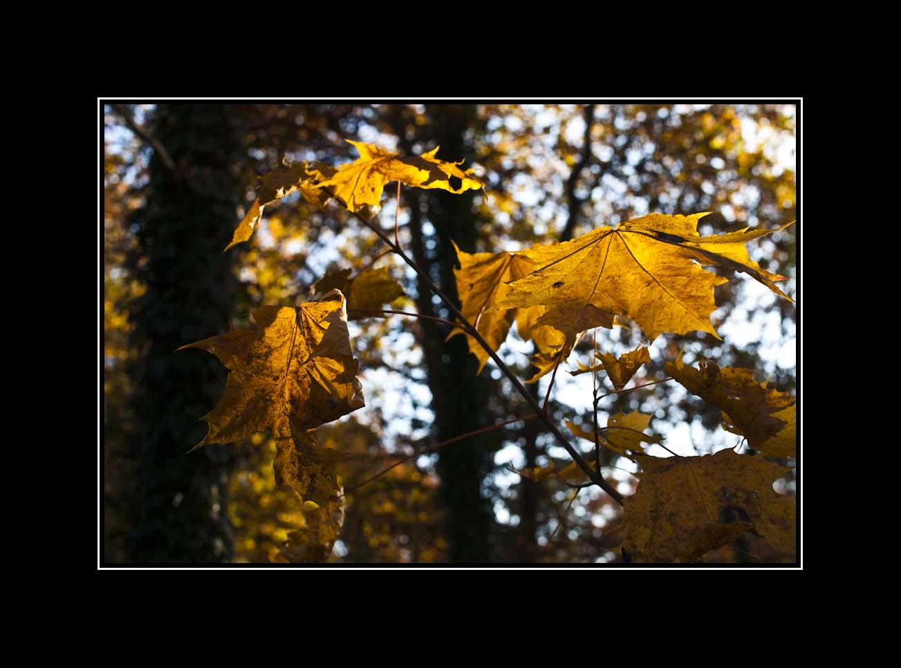... die letzten Blätter ...