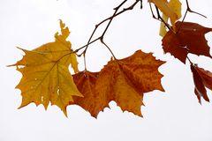 die letzten Blätter...