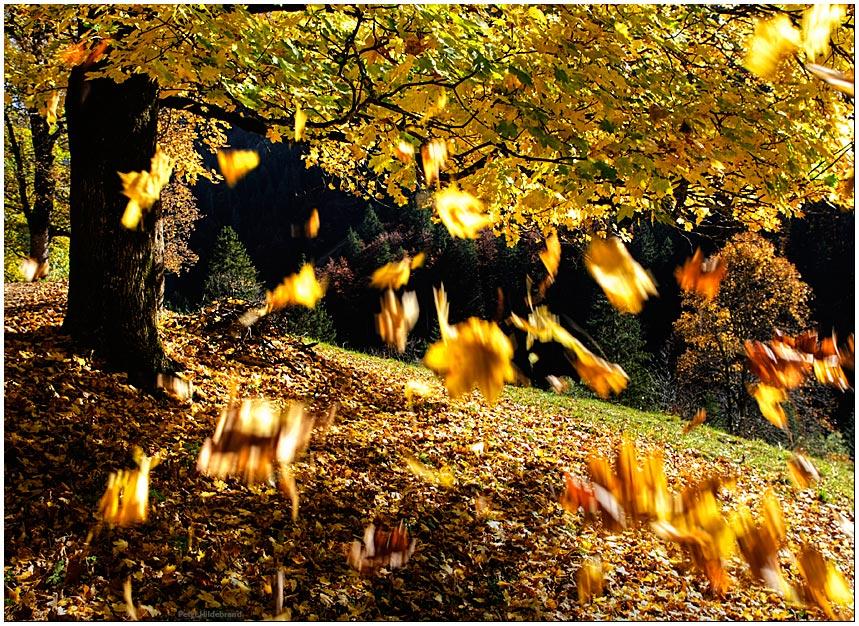 die letzten Blätter fallen Foto& Bild jahreszeiten, herbst, natur Bilder auf fotocommunity ~ 01120309_Blätter Von Sukkulenten Fallen Ab