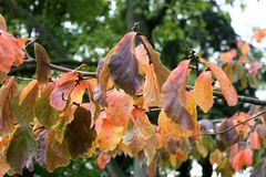 die letzten Blätter halten sich fest