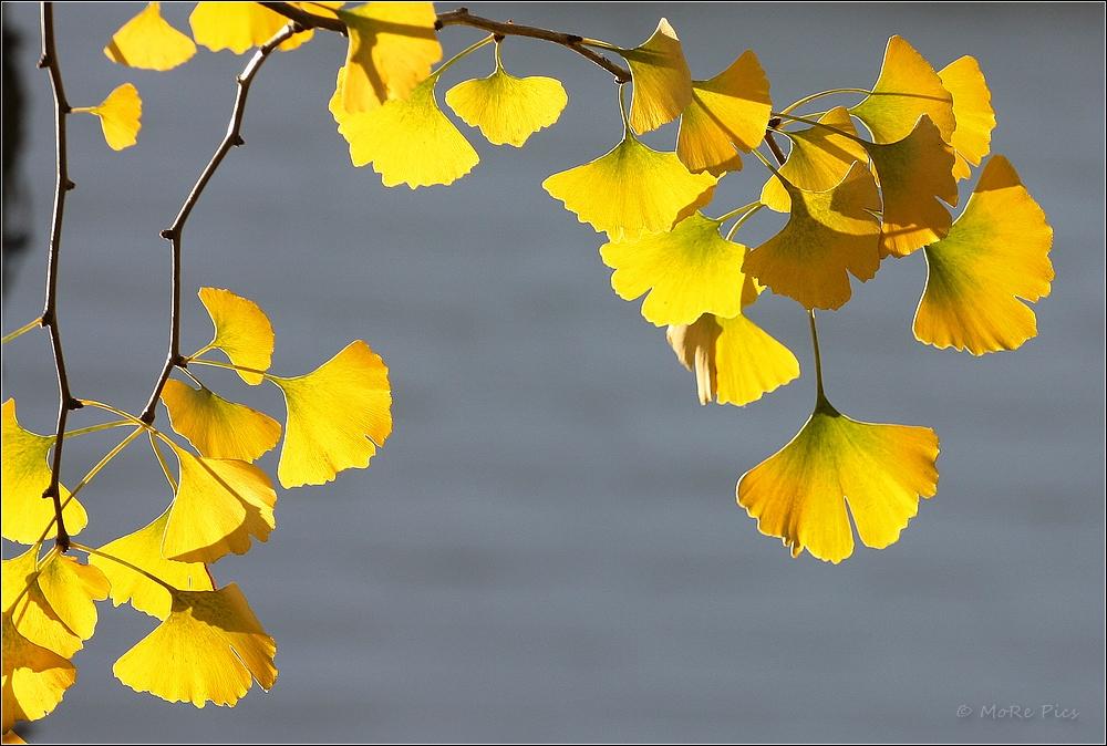 Die letzten Blätter in der Novembersonne