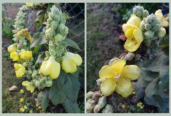 Die letzten Blüten (5)