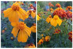 Die letzten Blüten (6)
