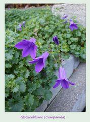 Die letzten Blüten (7)