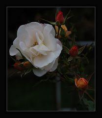 """ ..die letzten Blüten.."""