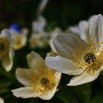 Die letzten Blüten für dieses Jahr