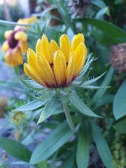 Die letzten Blüten im Garten (1)