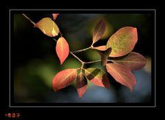 Die letzten Herbstfarben...
