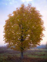 Die letzten Herbsttage...