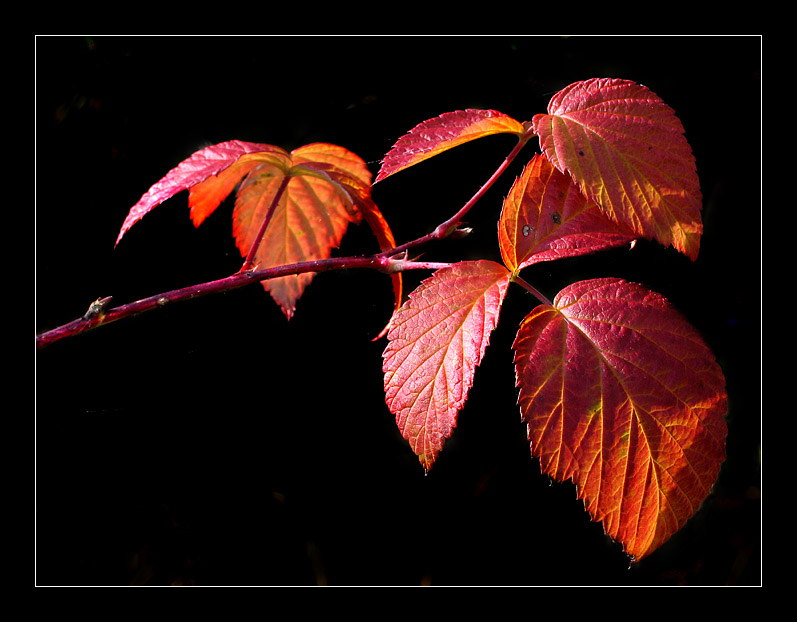 Die letzten Sonnenstrahlen des Herbstes