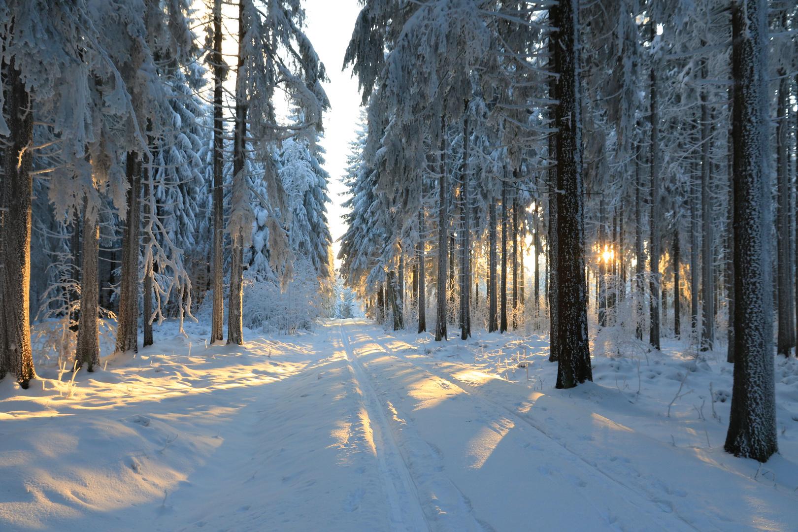 die letzten Sonnenstrahlen des Wintertags