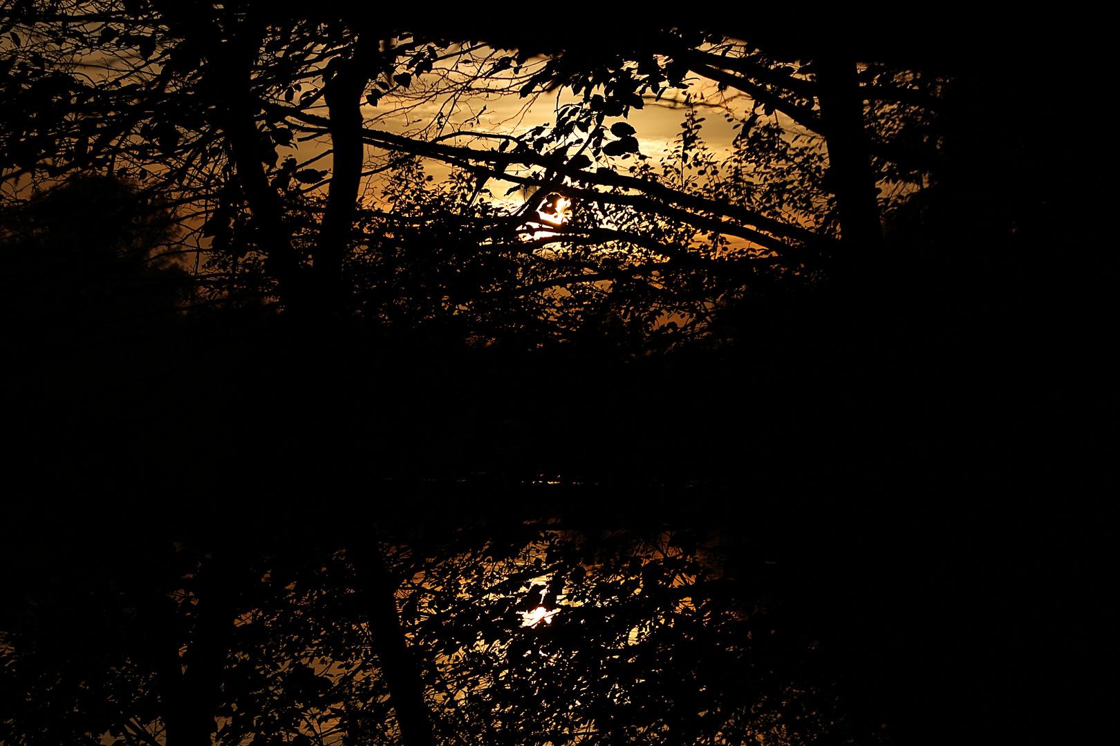 die letzten Sonnenstrahlen durch die Zweige