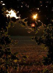 Die letzten Strahlen der Abendsonne......