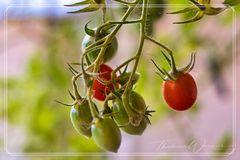 Die letzten Tomaten