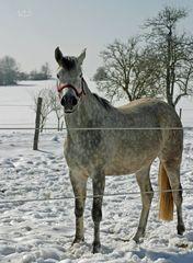 """""""die letzten Winter-Fotos so Gott will"""""""