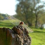 Die Libelle und das Sonnenlicht