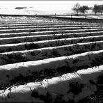 Die Liebe des Landwirts zur Geometrie