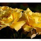 Die Liebe ist eine köstliche Blume....