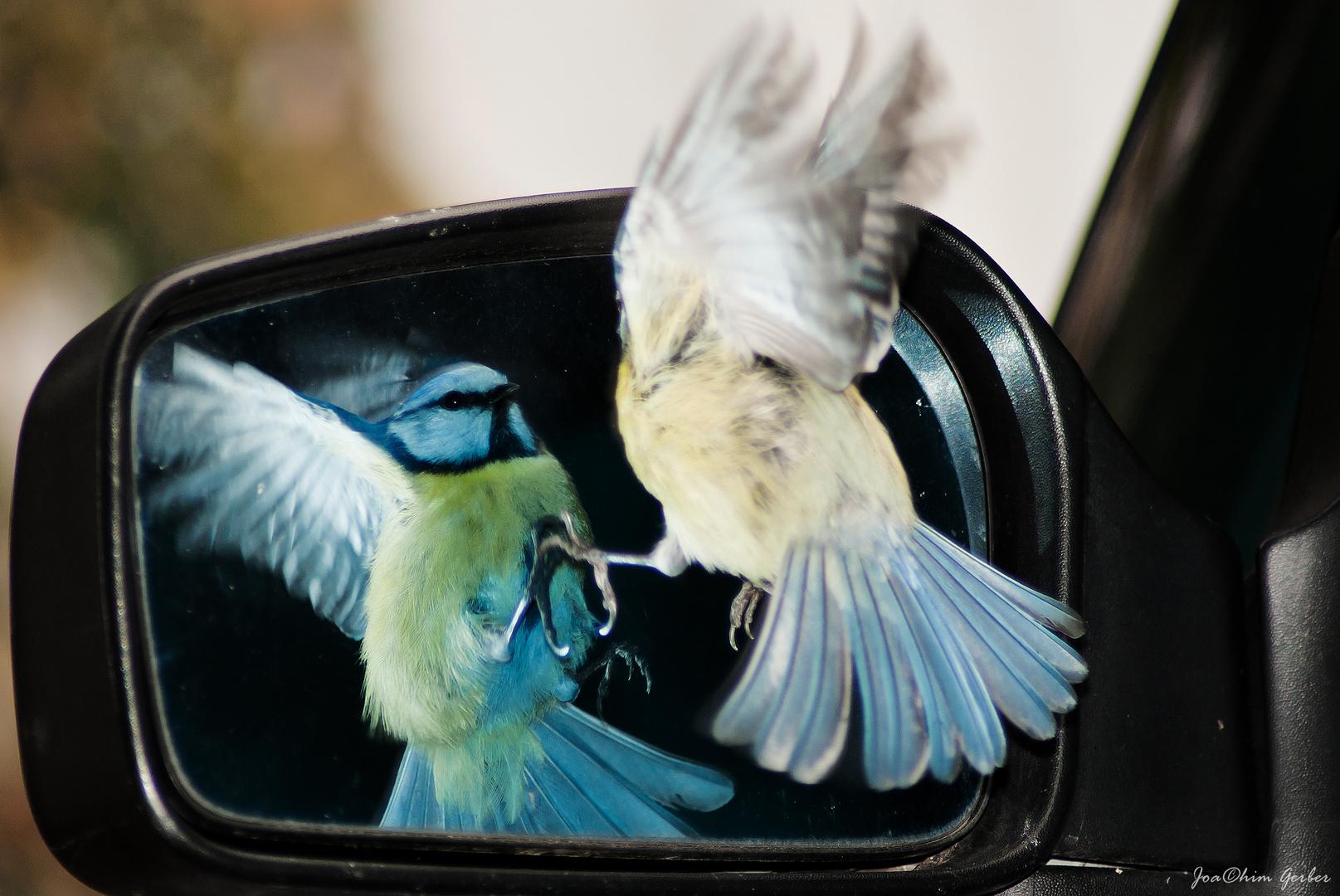 Die Liebe zum Spiegelbild 2