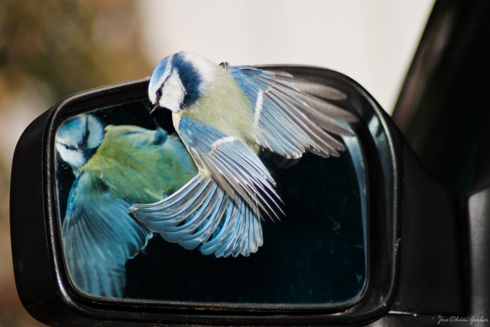 Die Liebe zum Spiegelbild