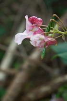 Die lila Blume