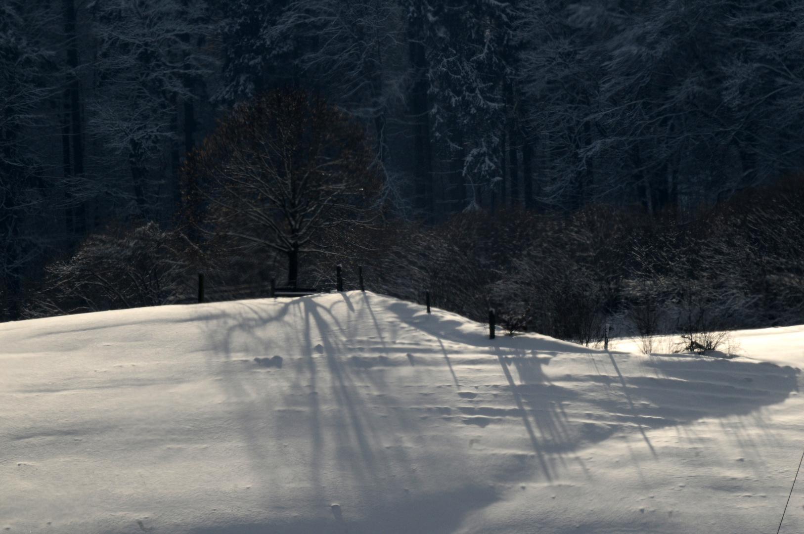 Die Linde im Winter