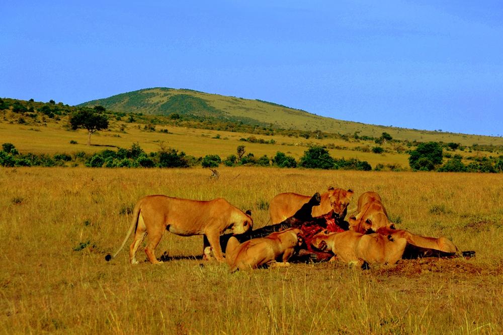 Die Löwenmahlzeit