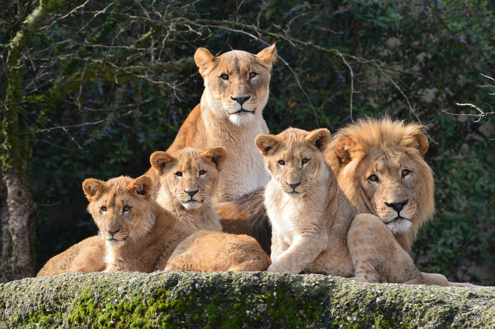 Die Loven Familie.