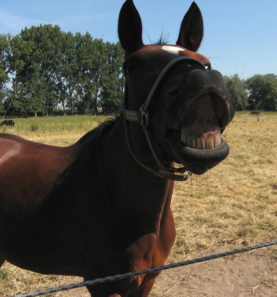 Die lustigen Pferde von Kemme II