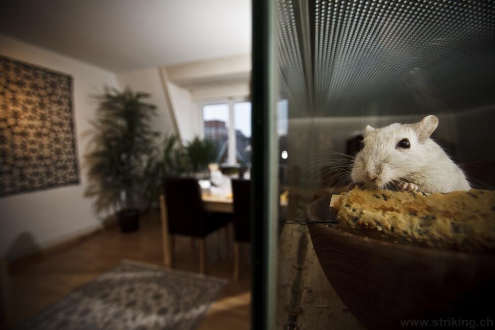 Die Luxusaussicht meiner Maus