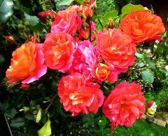 Die Macht der Blumen