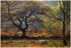 Die Magie des Herbstes in Farbe und Licht ...