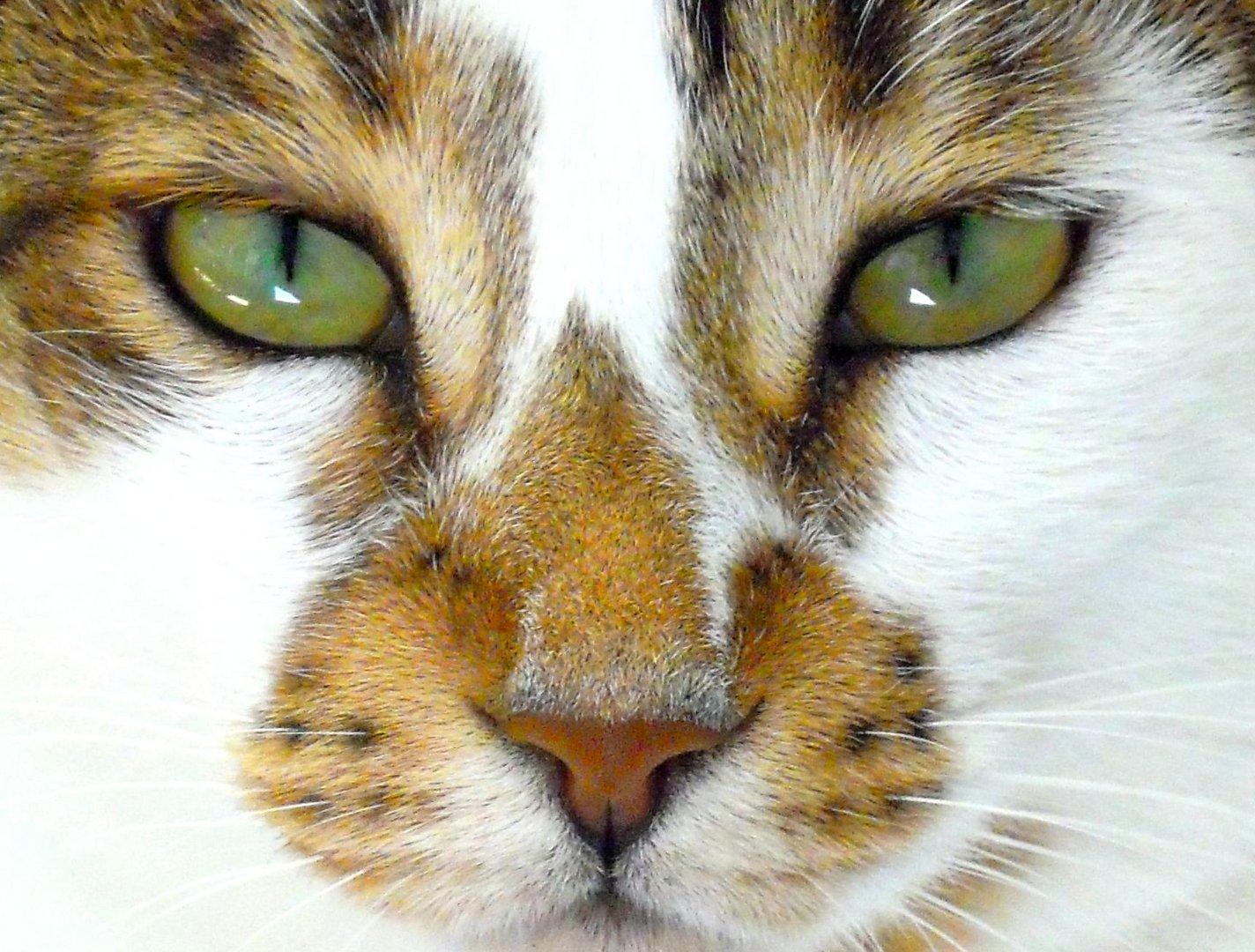 die magischen Augen