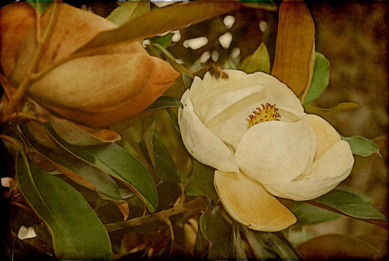 Die Magnolie