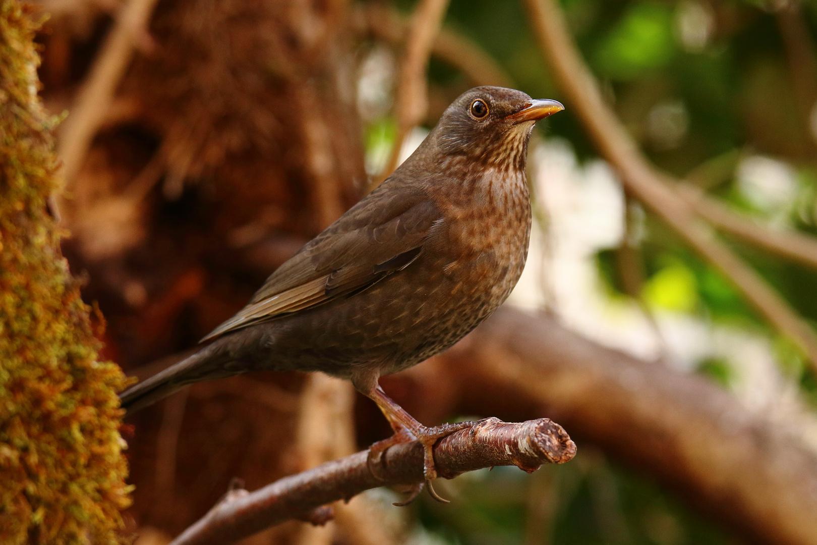 die mamsell foto  bild  tiere wildlife natur